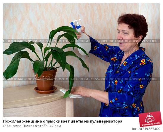 Купить «Пожилая женщина опрыскивает цветы из пульверизатора», эксклюзивное фото № 19557009, снято 24 декабря 2015 г. (c) Вячеслав Палес / Фотобанк Лори