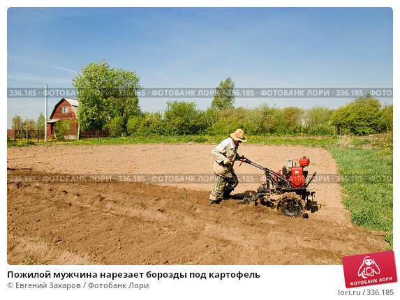 Пожилой мужчина нарезает борозды под картофель, фото № 336185, снято 18 мая 2008 г. (c) Евгений Захаров / Фотобанк Лори