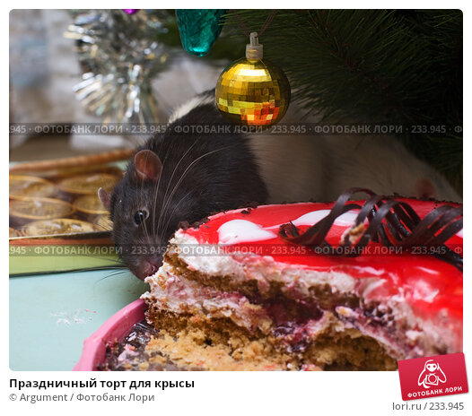 Праздничный торт для крысы, фото № 233945, снято 31 декабря 2007 г. (c) Argument / Фотобанк Лори