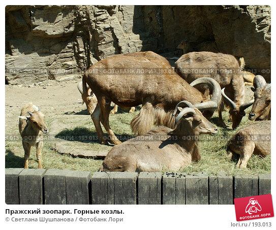 Пражский зоопарк. Горные козлы., фото № 193013, снято 9 мая 2006 г. (c) Светлана Шушпанова / Фотобанк Лори
