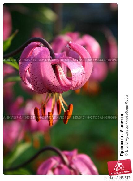 Прекрасный цветок, фото № 145517, снято 8 июля 2006 г. (c) Елена Мусатова / Фотобанк Лори