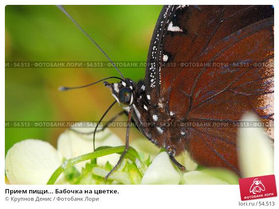Прием пищи... Бабочка на цветке., фото № 54513, снято 7 мая 2007 г. (c) Крупнов Денис / Фотобанк Лори