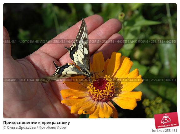 Прикосновение к прекрасному, фото № 258481, снято 30 июля 2005 г. (c) Ольга Дроздова / Фотобанк Лори