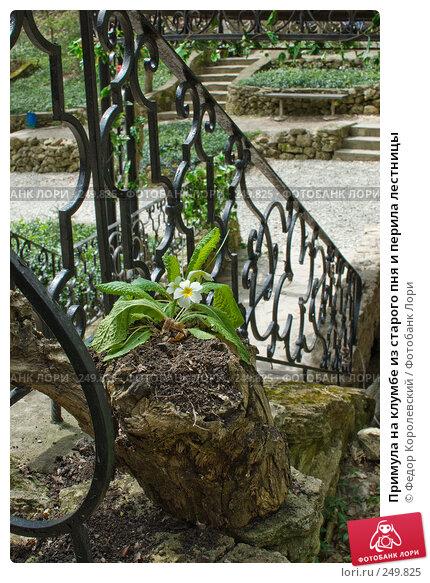 Примула на клумбе из старого пня и перила лестницы, фото № 249825, снято 12 апреля 2008 г. (c) Федор Королевский / Фотобанк Лори