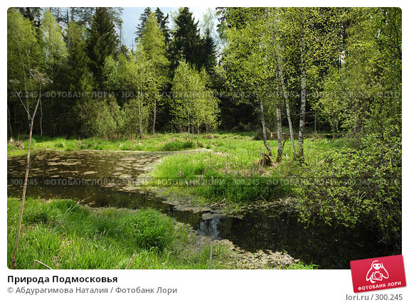 Купить «Природа Подмосковья», фото № 300245, снято 11 мая 2008 г. (c) Абдурагимова Наталия / Фотобанк Лори