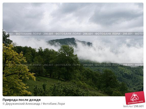 Купить «Природа после дождя», фото № 298601, снято 12 мая 2008 г. (c) Деружинский Александр / Фотобанк Лори