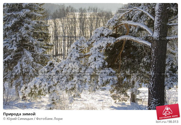 Природа зимой, фото № 98013, снято 12 февраля 2007 г. (c) Юрий Синицын / Фотобанк Лори