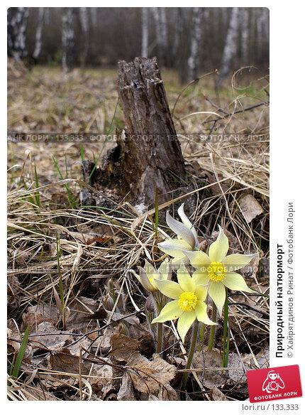 Купить «Природный натюрморт», фото № 133333, снято 5 мая 2007 г. (c) Хайрятдинов Ринат / Фотобанк Лори
