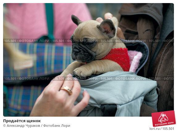Продаётся щенок, фото № 105501, снято 27 октября 2007 г. (c) Александр Чураков / Фотобанк Лори