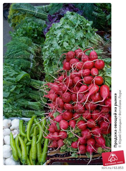 Продажа овощей на рынке, фото № 63853, снято 18 июля 2007 г. (c) Юрий Синицын / Фотобанк Лори