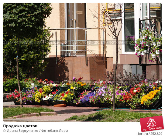 Продажа цветов, фото № 252829, снято 5 июня 2007 г. (c) Ирина Борсученко / Фотобанк Лори