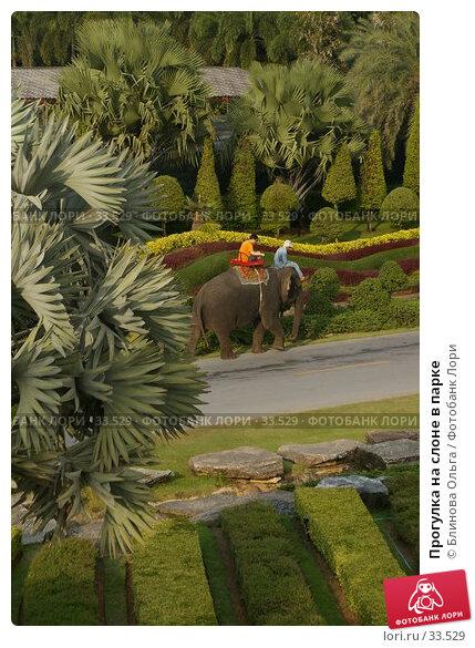 Прогулка на слоне в парке, фото № 33529, снято 31 декабря 2006 г. (c) Блинова Ольга / Фотобанк Лори