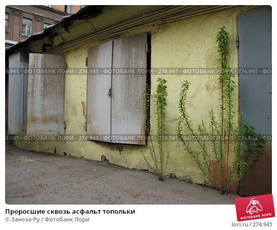 Проросшие сквозь асфальт топольки, фото № 274941, снято 1 мая 2008 г. (c) Заноза-Ру / Фотобанк Лори