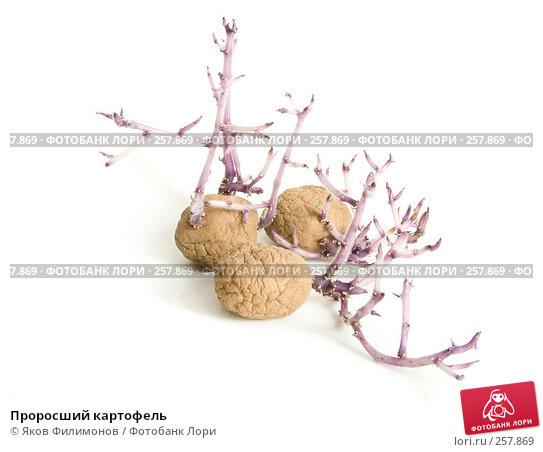 Проросший картофель, фото № 257869, снято 12 апреля 2008 г. (c) Яков Филимонов / Фотобанк Лори