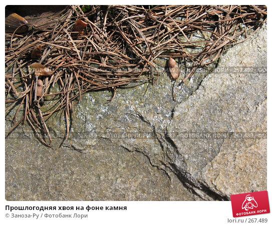 Прошлогодняя хвоя на фоне камня, фото № 267489, снято 20 апреля 2008 г. (c) Заноза-Ру / Фотобанк Лори