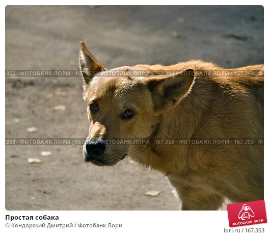 Простая собака, фото № 167353, снято 22 сентября 2007 г. (c) Кондорский Дмитрий / Фотобанк Лори
