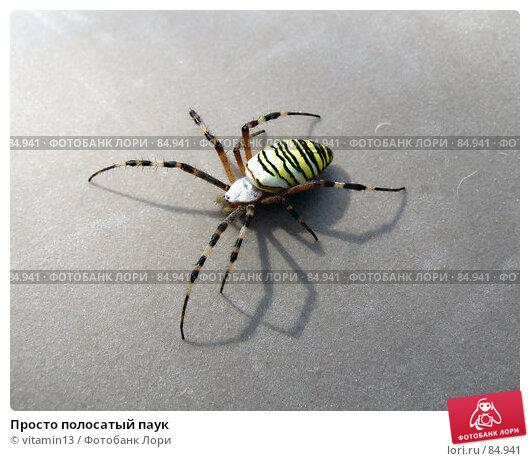 Купить «Просто полосатый паук», фото № 84941, снято 12 августа 2007 г. (c) vitamin13 / Фотобанк Лори