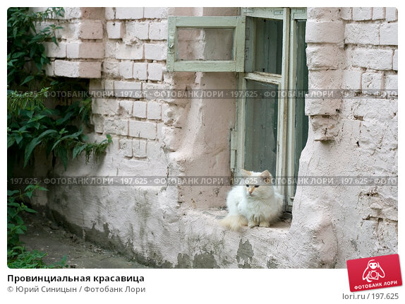 Провинциальная красавица, фото № 197625, снято 26 августа 2007 г. (c) Юрий Синицын / Фотобанк Лори