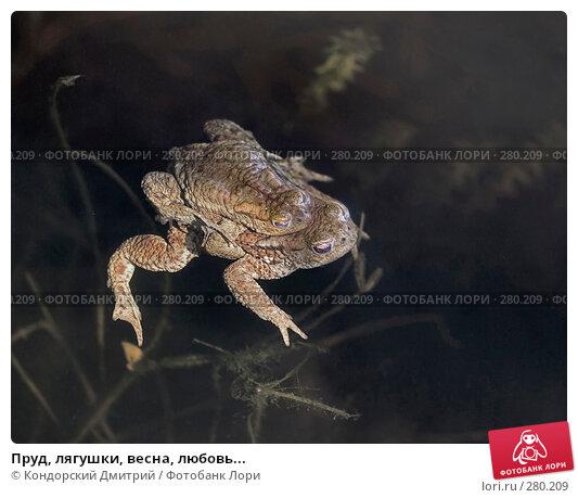 Пруд, лягушки, весна, любовь..., фото № 280209, снято 3 мая 2008 г. (c) Кондорский Дмитрий / Фотобанк Лори