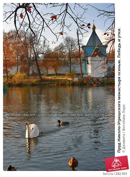 Купить «Пруд Николо-Угрешского монастыря осенью. Лебедь и утки.», фото № 242501, снято 29 октября 2007 г. (c) Дживита / Фотобанк Лори