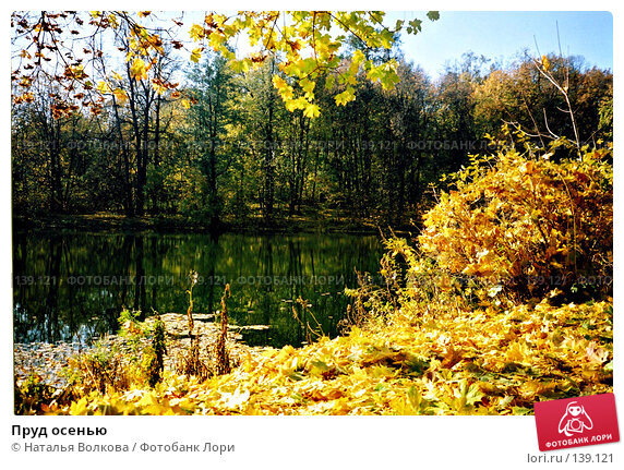 Пруд осенью, эксклюзивное фото № 139121, снято 10 декабря 2016 г. (c) Наталья Волкова / Фотобанк Лори