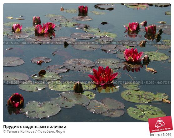 Прудик с водяными лилиями, фото № 5069, снято 1 июля 2006 г. (c) Tamara Kulikova / Фотобанк Лори