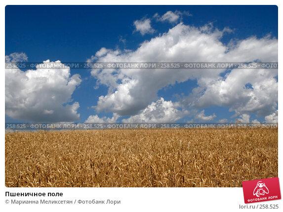 Пшеничное поле, фото № 258525, снято 28 июля 2007 г. (c) Марианна Меликсетян / Фотобанк Лори