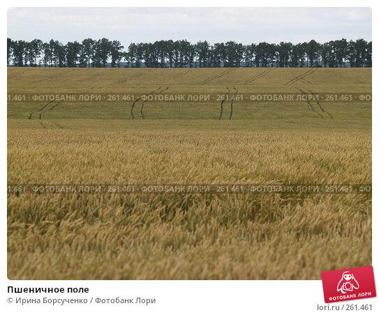 Пшеничное поле, фото № 261461, снято 20 июня 2007 г. (c) Ирина Борсученко / Фотобанк Лори