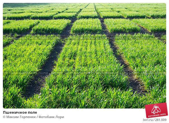Пшеничное поле, фото № 281009, снято 15 апреля 2007 г. (c) Максим Горпенюк / Фотобанк Лори