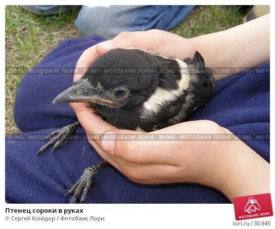 Купить «Птенец сороки в руках», фото № 30945, снято 26 мая 2006 г. (c) Сергей Ксейдор / Фотобанк Лори