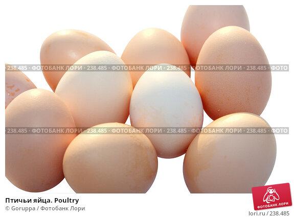 Птичьи яйца. Poultry, фото № 238485, снято 15 января 2008 г. (c) Goruppa / Фотобанк Лори