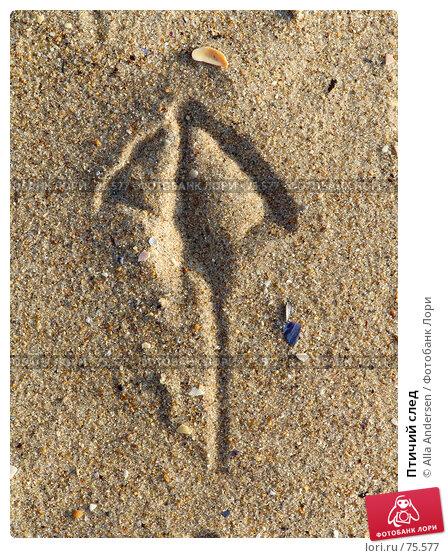 Птичий след, фото № 75577, снято 20 октября 2006 г. (c) Alla Andersen / Фотобанк Лори