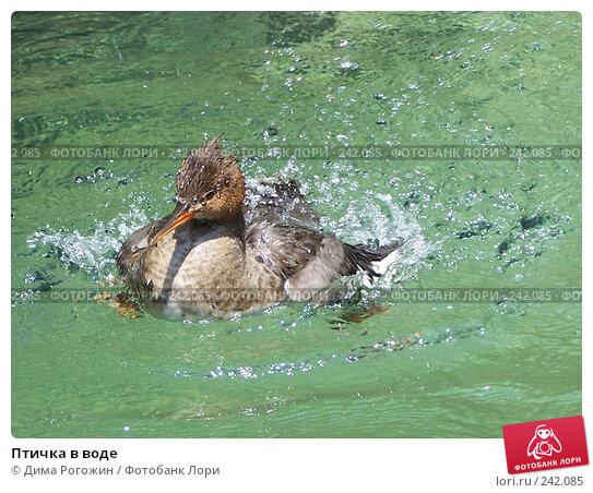 Птичка в воде, фото № 242085, снято 27 июля 2006 г. (c) Дима Рогожин / Фотобанк Лори