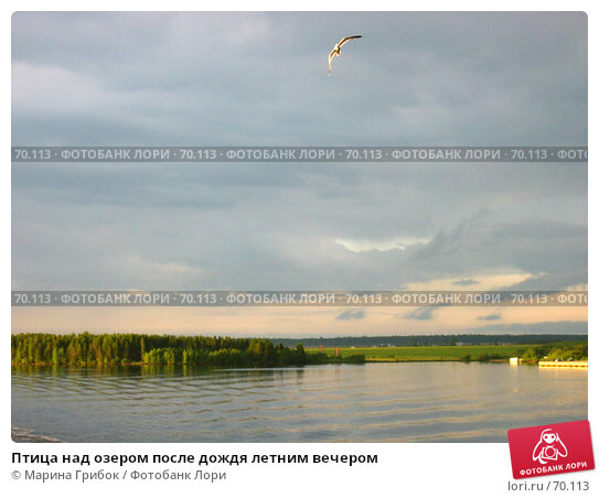 Купить «Птица над озером после дождя летним вечером», фото № 70113, снято 1 июня 2005 г. (c) Марина Грибок / Фотобанк Лори