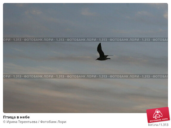 Птица в небе, эксклюзивное фото № 1313, снято 15 сентября 2005 г. (c) Ирина Терентьева / Фотобанк Лори
