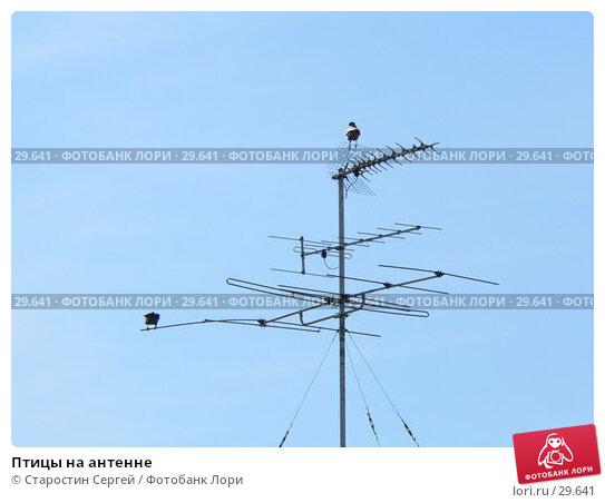 Птицы на антенне, фото № 29641, снято 1 апреля 2007 г. (c) Старостин Сергей / Фотобанк Лори