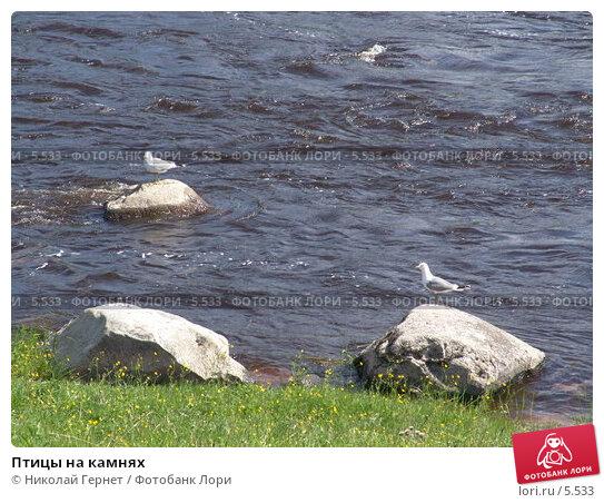 Птицы на камнях, фото № 5533, снято 12 июня 2005 г. (c) Николай Гернет / Фотобанк Лори