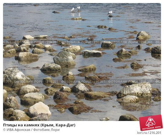 Птицы на камнях (Крым, Кара-Даг), фото № 216201, снято 15 сентября 2006 г. (c) ИВА Афонская / Фотобанк Лори