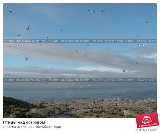 Птицы над островом, фото № 73209, снято 19 ноября 2006 г. (c) Елена Яковенко / Фотобанк Лори