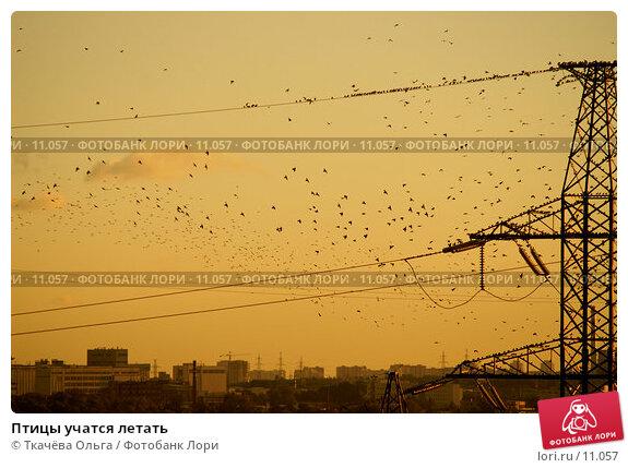 Птицы учатся летать, фото № 11057, снято 9 сентября 2006 г. (c) Ткачёва Ольга / Фотобанк Лори