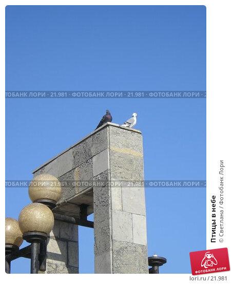Купить «Птицы в небе», фото № 21981, снято 21 октября 2006 г. (c) Светлана / Фотобанк Лори