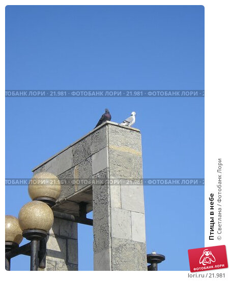 Птицы в небе, фото № 21981, снято 21 октября 2006 г. (c) Светлана / Фотобанк Лори