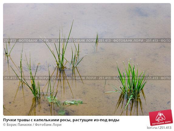 Пучки травы с капельками росы, растущие из-под воды, фото № 251413, снято 11 апреля 2008 г. (c) Борис Панасюк / Фотобанк Лори