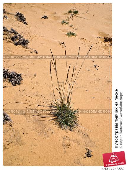 Пучок травы типчак на песке, фото № 242589, снято 29 марта 2008 г. (c) Борис Панасюк / Фотобанк Лори