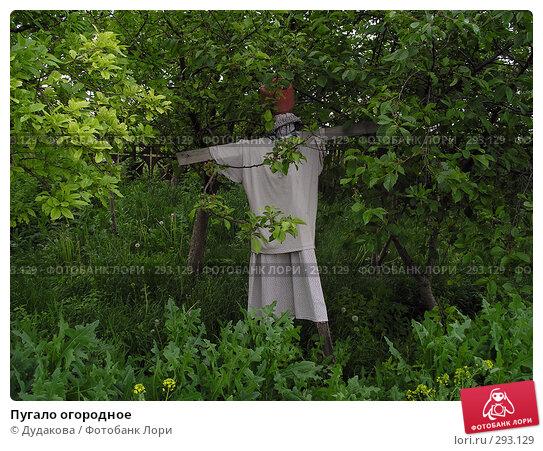 Купить «Пугало огородное», фото № 293129, снято 27 мая 2004 г. (c) Дудакова / Фотобанк Лори