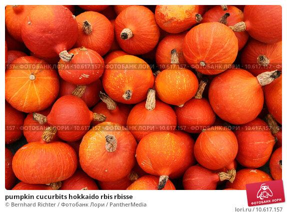 pumpkin cucurbits hokkaido rbis rbisse. Стоковое фото, фотограф Bernhard Richter / PantherMedia / Фотобанк Лори
