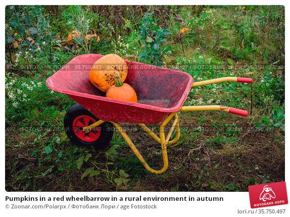 Pumpkins in a red wheelbarrow in a rural environment in autumn. Стоковое фото, фотограф Zoonar.com/Polarpx / age Fotostock / Фотобанк Лори