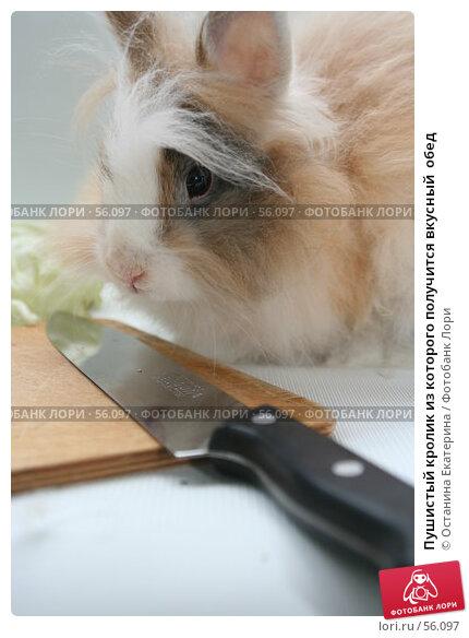 Пушистый кролик из которого получится вкусный  обед, фото № 56097, снято 6 октября 2006 г. (c) Останина Екатерина / Фотобанк Лори