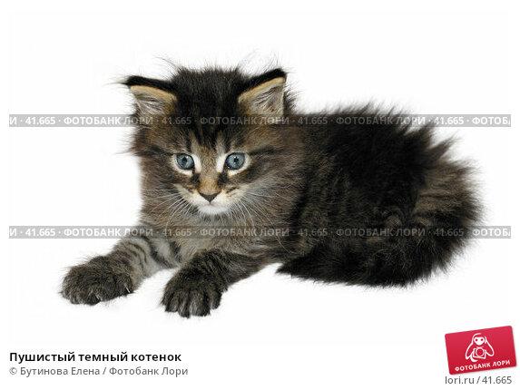 Пушистый темный котенок, фото № 41665, снято 6 мая 2007 г. (c) Бутинова Елена / Фотобанк Лори