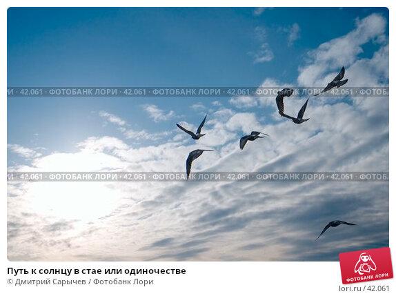 Путь к солнцу в стае или одиночестве, фото № 42061, снято 31 марта 2007 г. (c) Дмитрий Сарычев / Фотобанк Лори